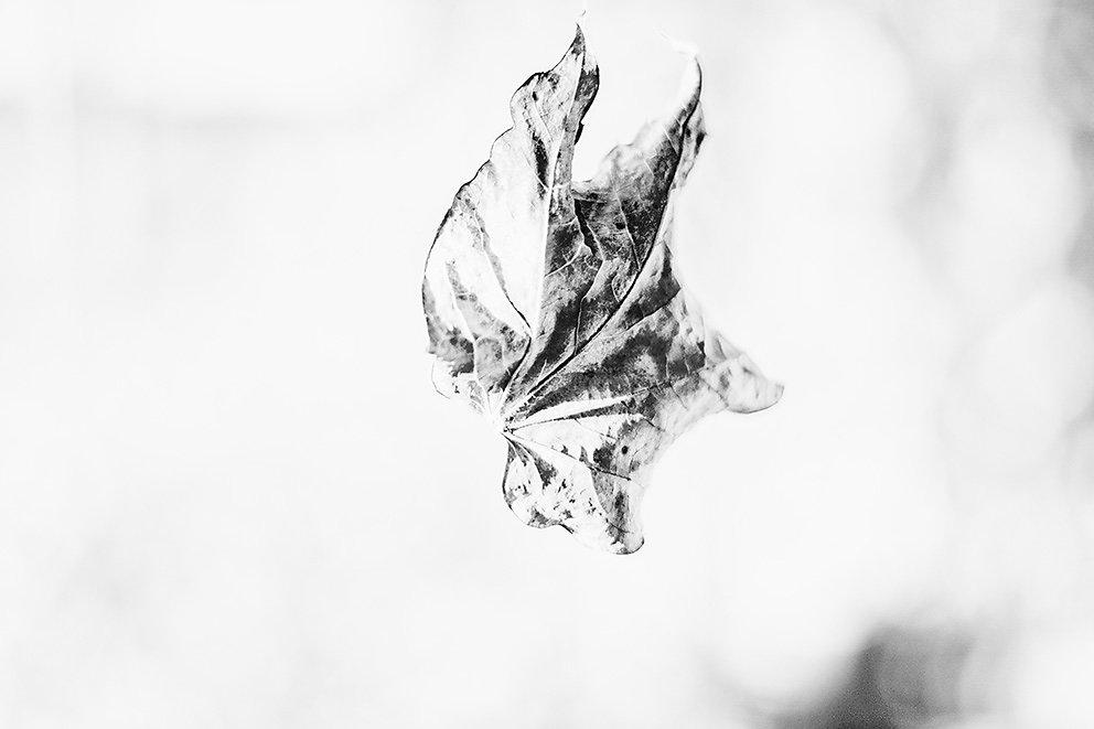 study on a leaf